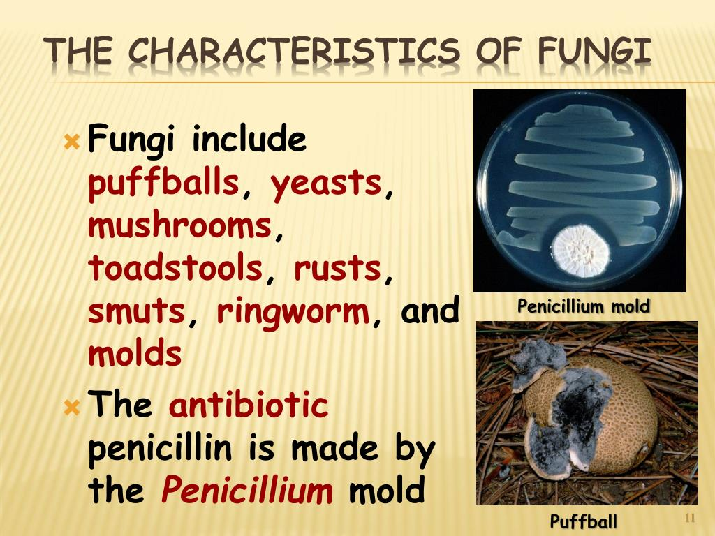 Fungi include