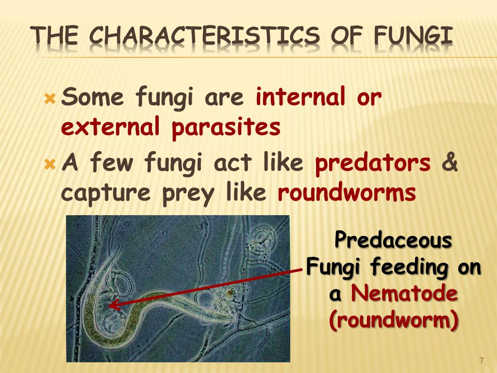 Some fungi are