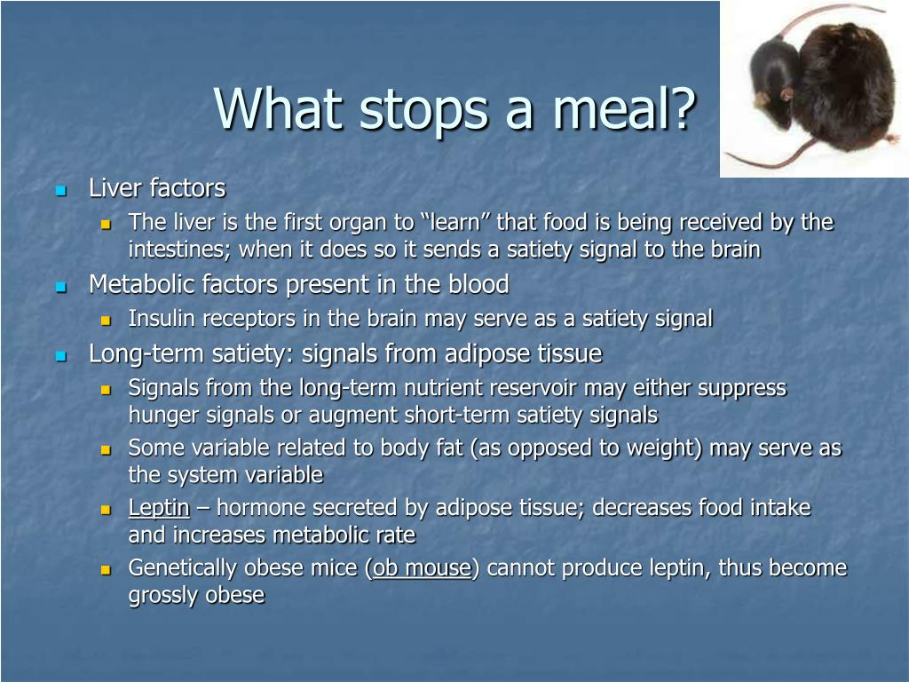 What stops a meal?
