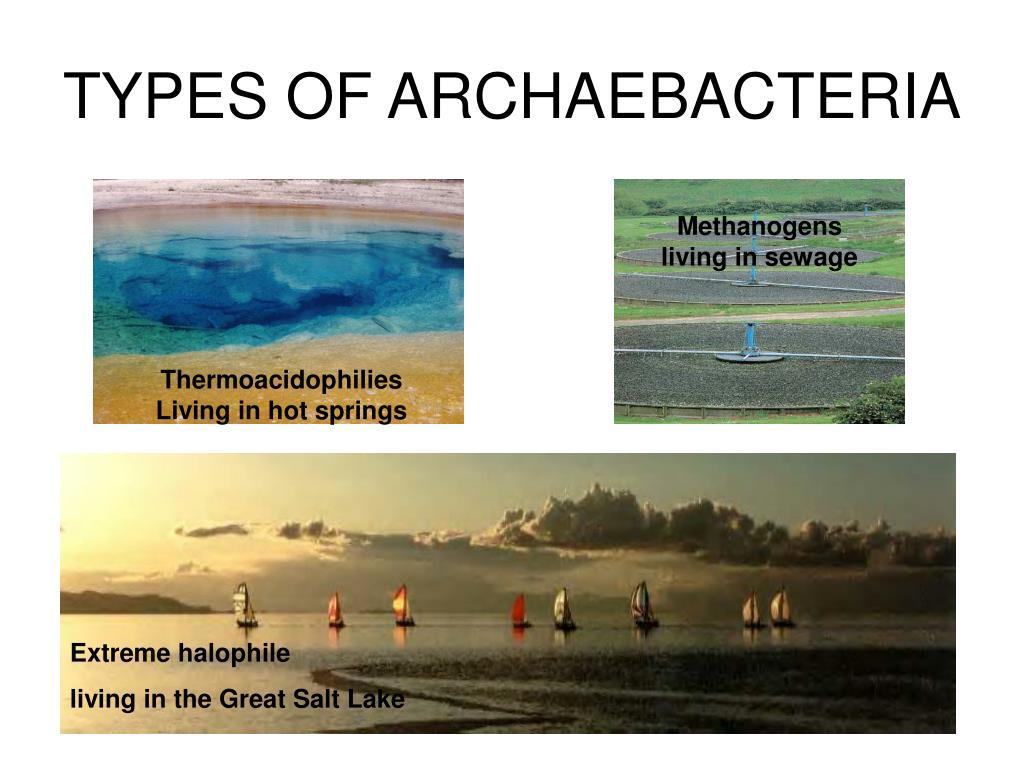 TYPES OF ARCHAEBACTERIA