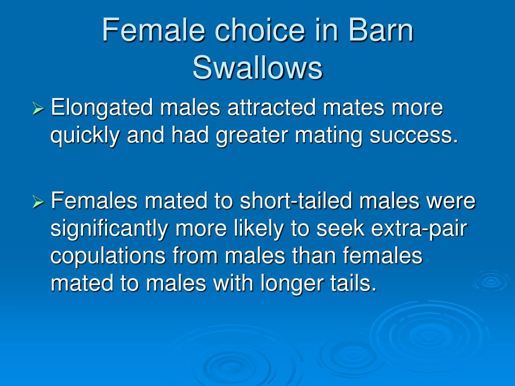 Female choice in Barn Swallows