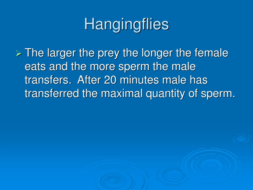 Hangingflies