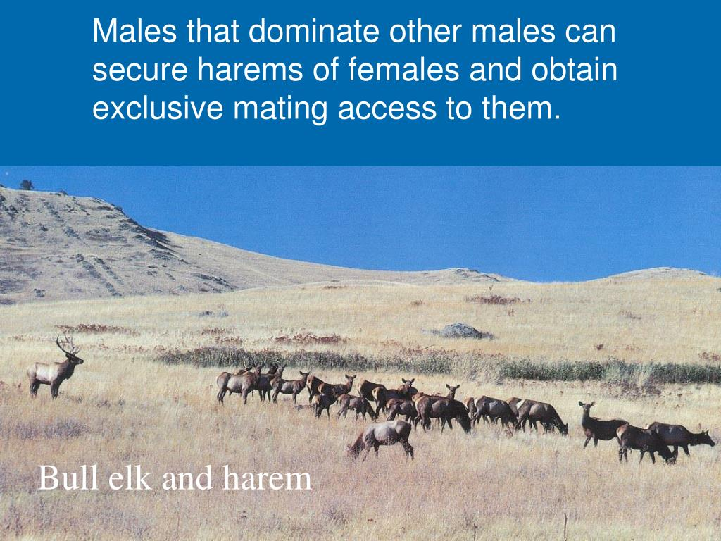 Males that dominate other males can