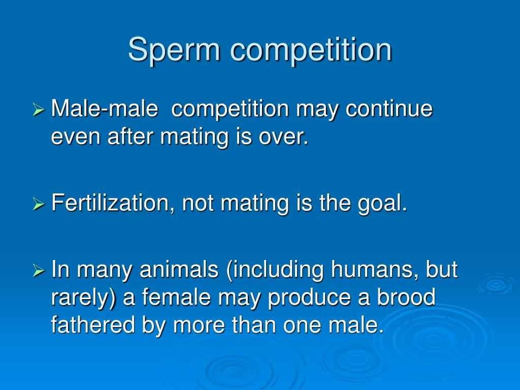 Sperm competition