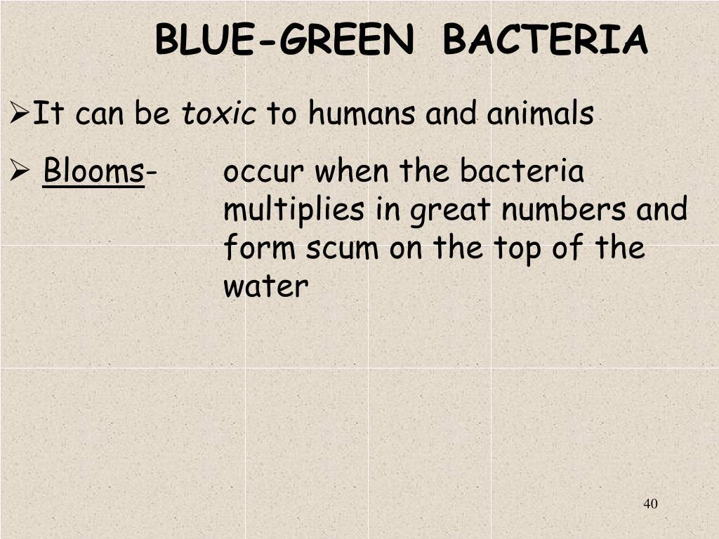 BLUE-GREEN BACTERIA