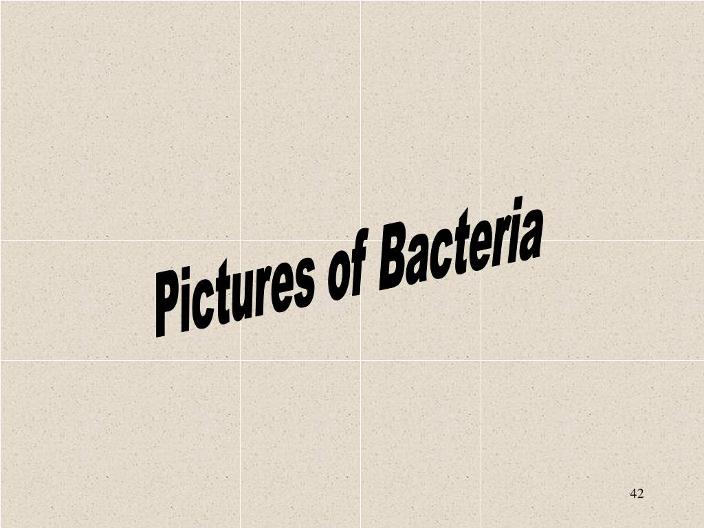 Pictures of Bacteria