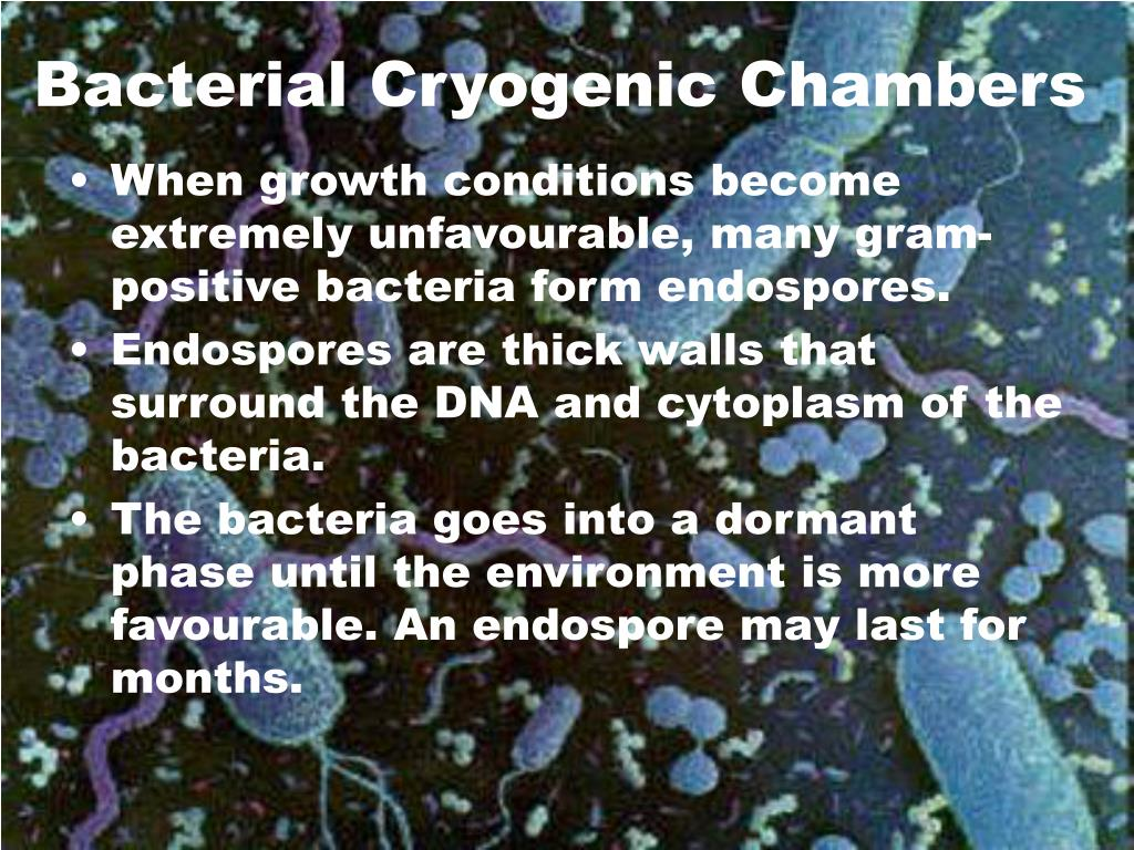 Bacterial Cryogenic Chambers