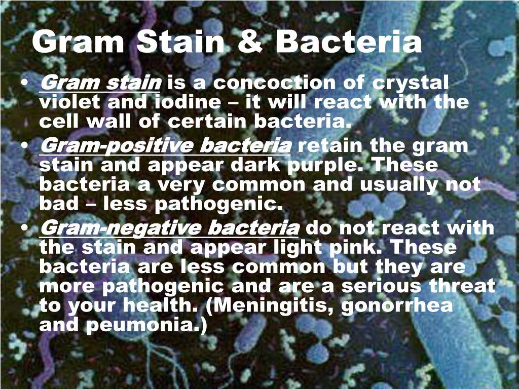 Gram Stain & Bacteria