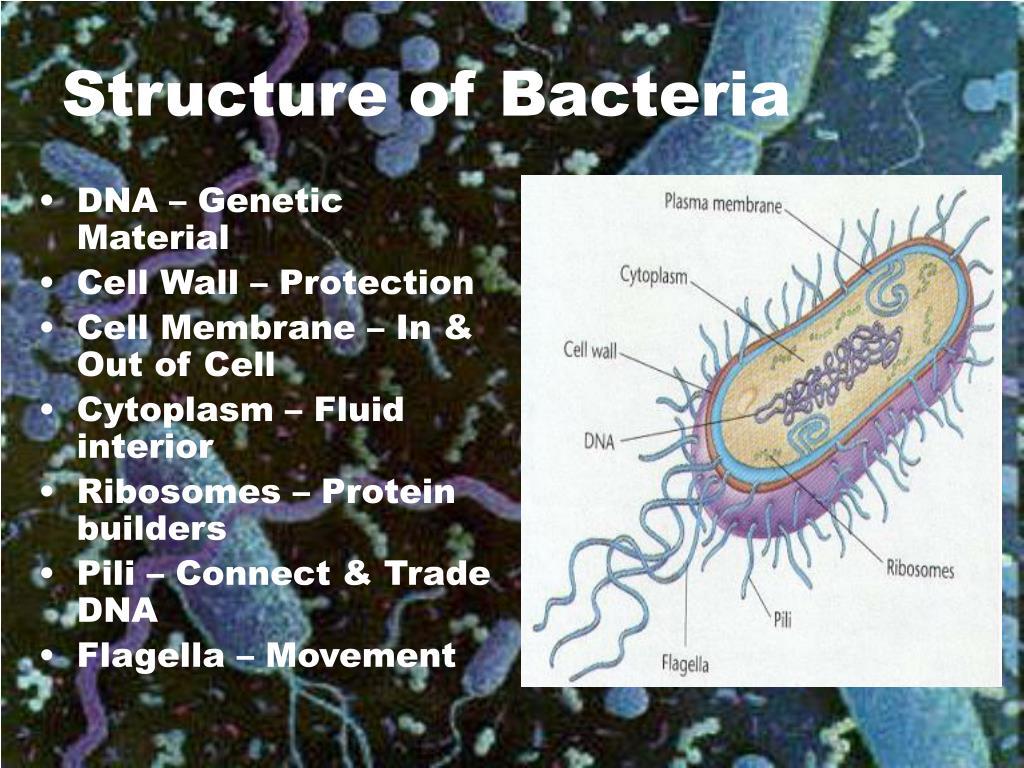 DNA – Genetic Material