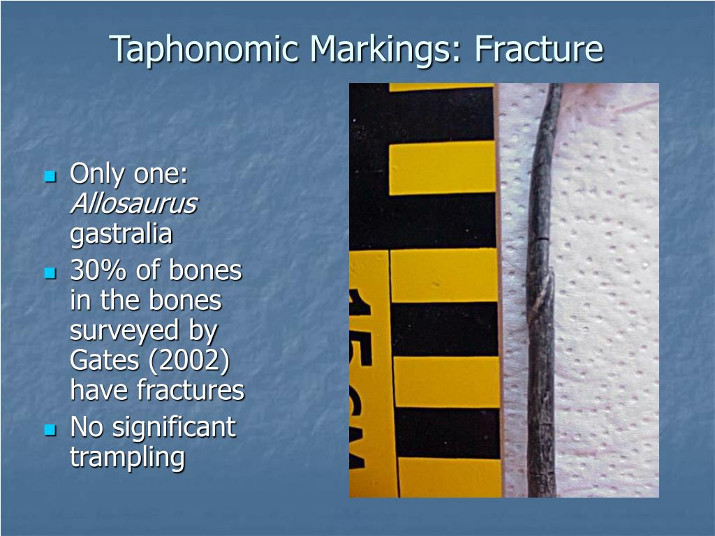 Taphonomic Markings: Fracture