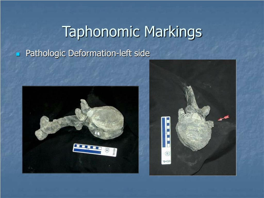 Taphonomic Markings