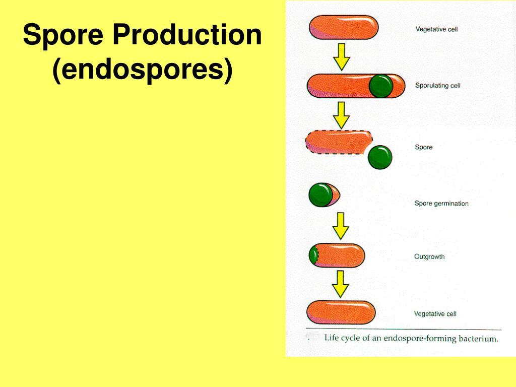 Spore Production