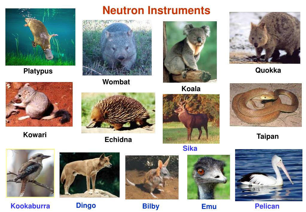 Neutron Instruments