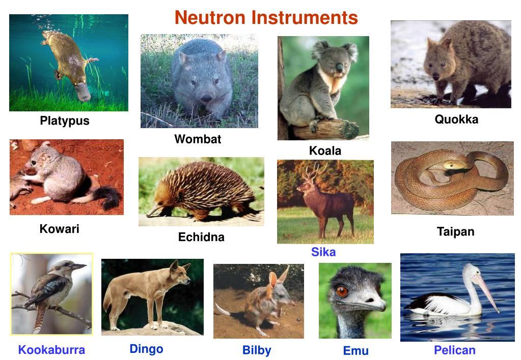 Neutron Instruments
