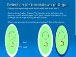 selection for breakdown of x gal