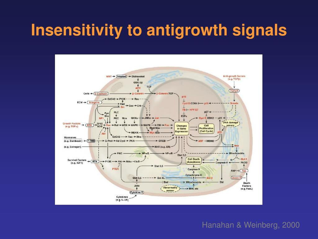 Insensitivity to antigrowth signals