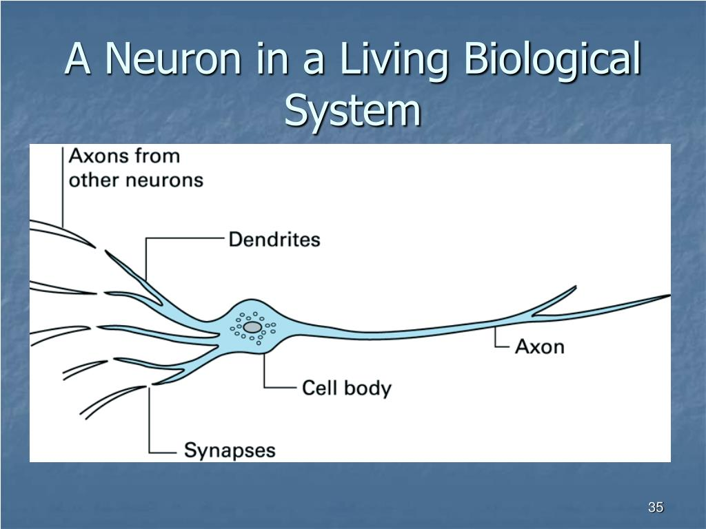 A Neuron in a Living Biological System
