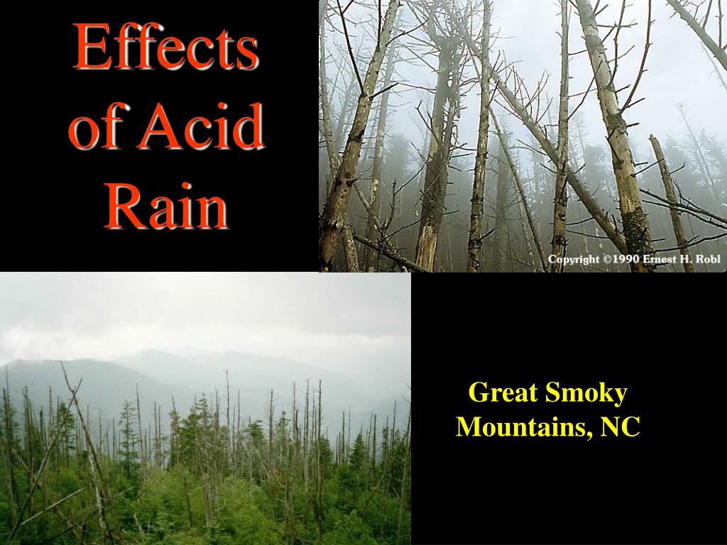 Effects of Acid Rain