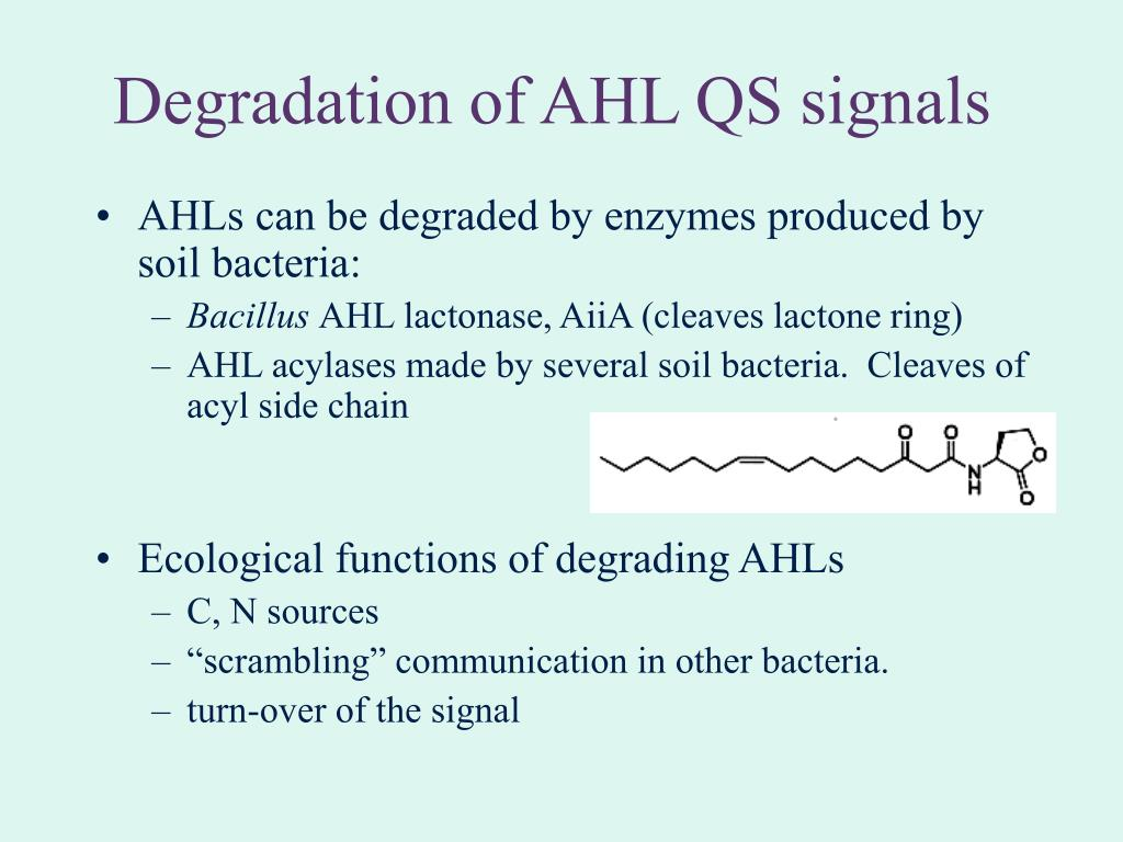 Degradation of AHL QS signals