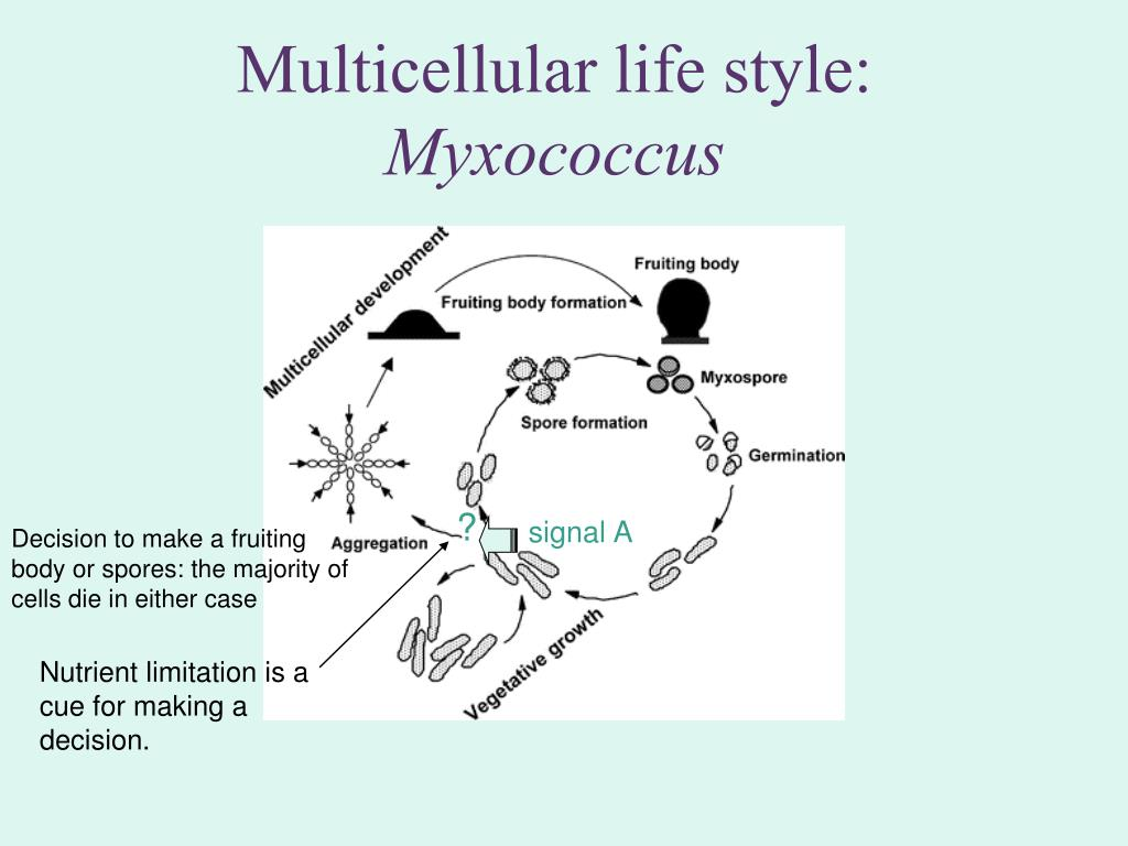 Multicellular life style:
