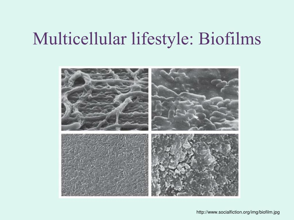 Multicellular lifestyle: Biofilms