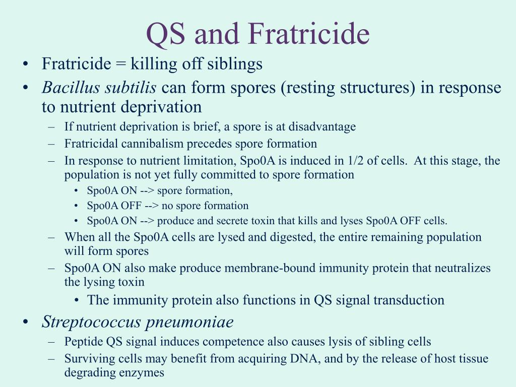 QS and Fratricide
