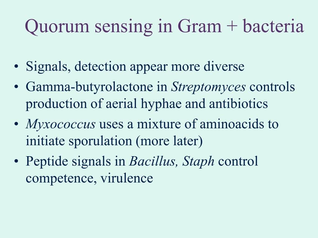 Quorum sensing in Gram + bacteria