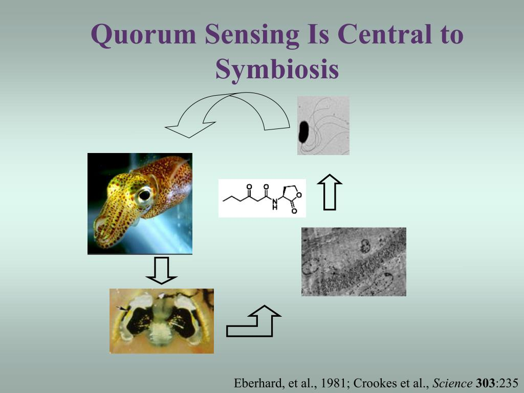 Quorum Sensing Is Central to Symbiosis