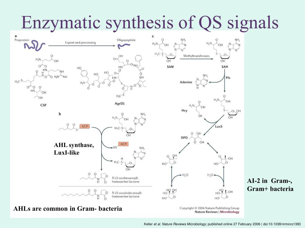 Enzymatic synthesis of QS signals