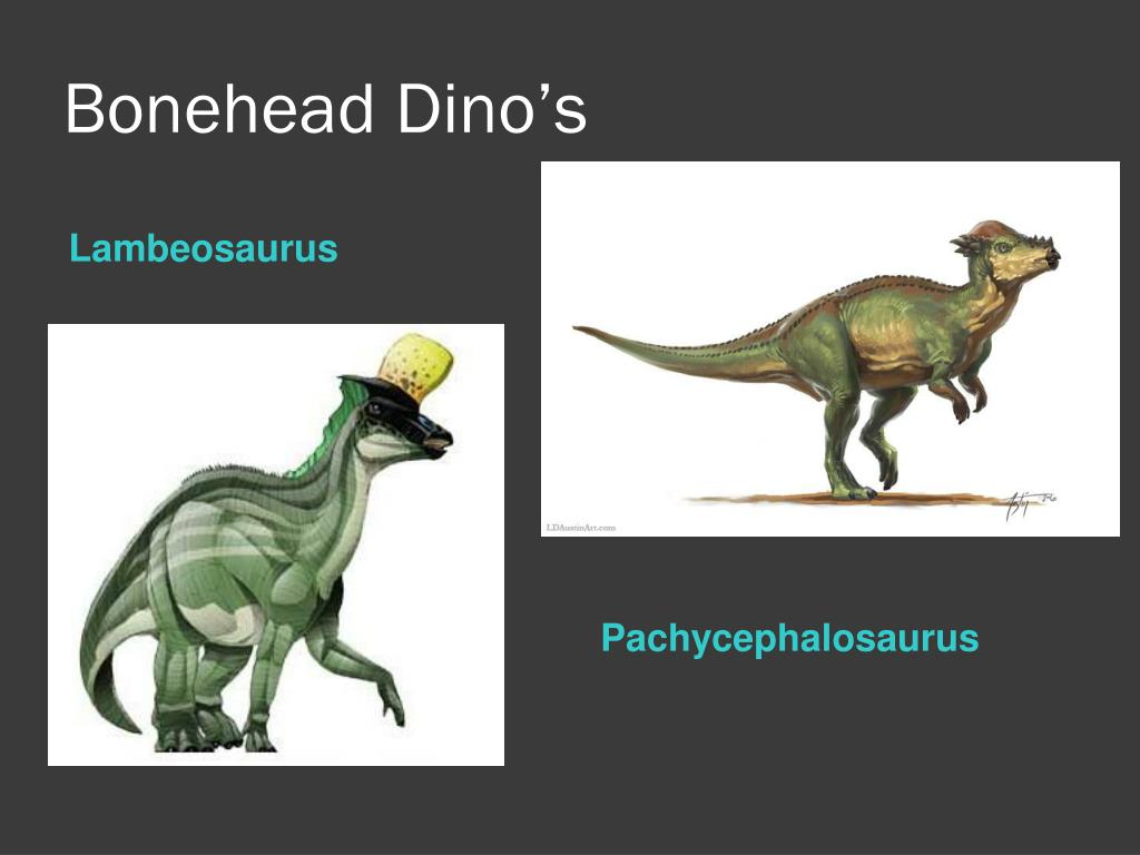 Bonehead Dino's