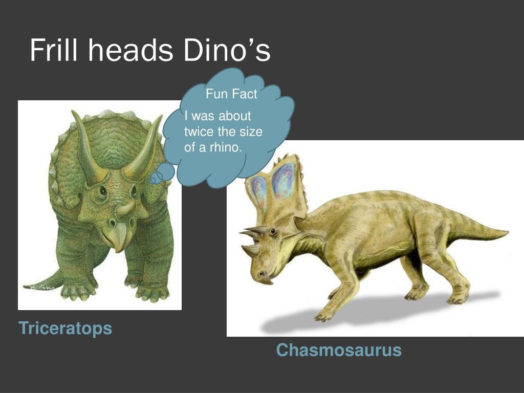 Frill heads Dino's