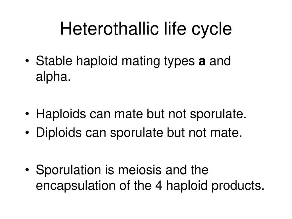 Heterothallic life cycle