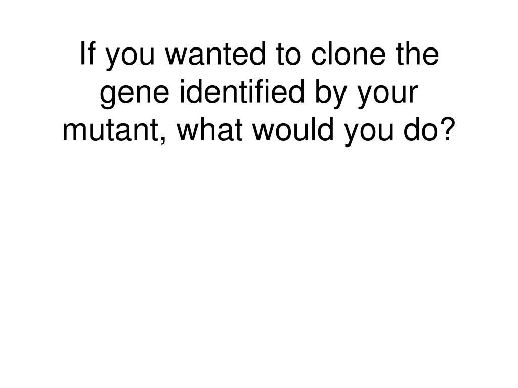 If you wanted to clone the gene identified by your mutant, what would you do?