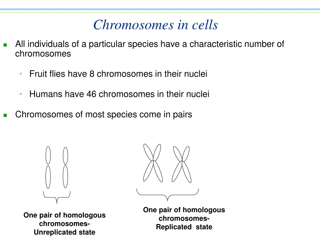 Chromosomes in cells