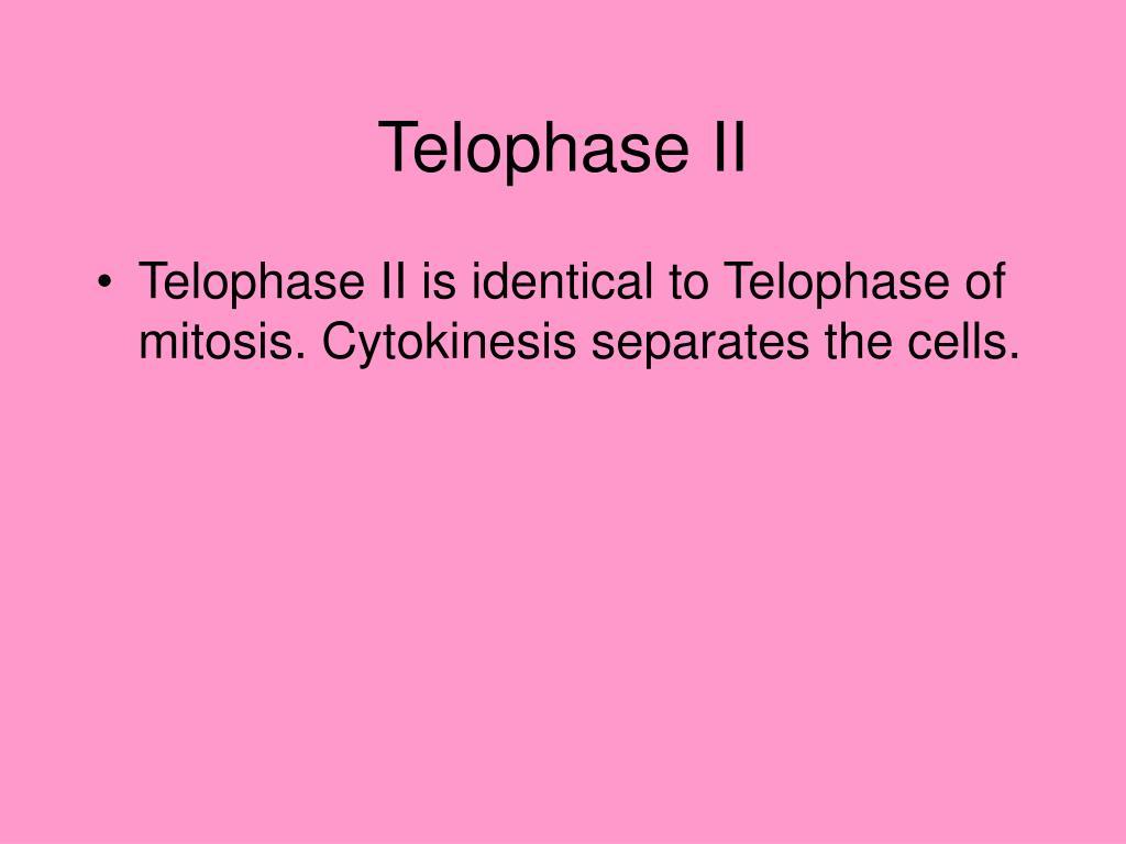 Telophase II