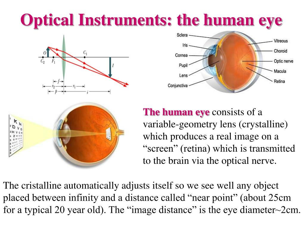 Optical Instruments: the human eye