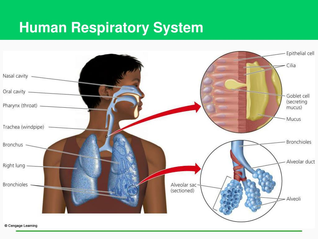 Human Ventilation System : Ppt air pollution climate change and ozone depletion