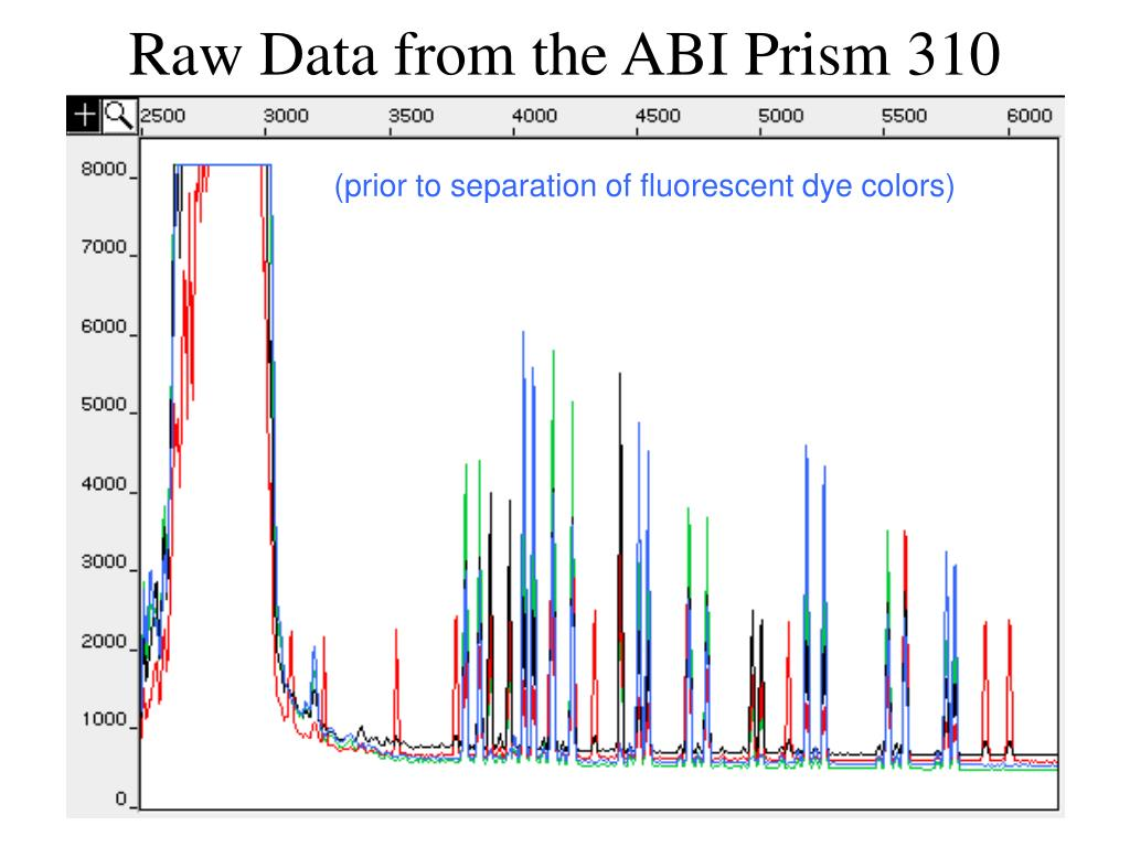 Raw Data from the ABI Prism 310