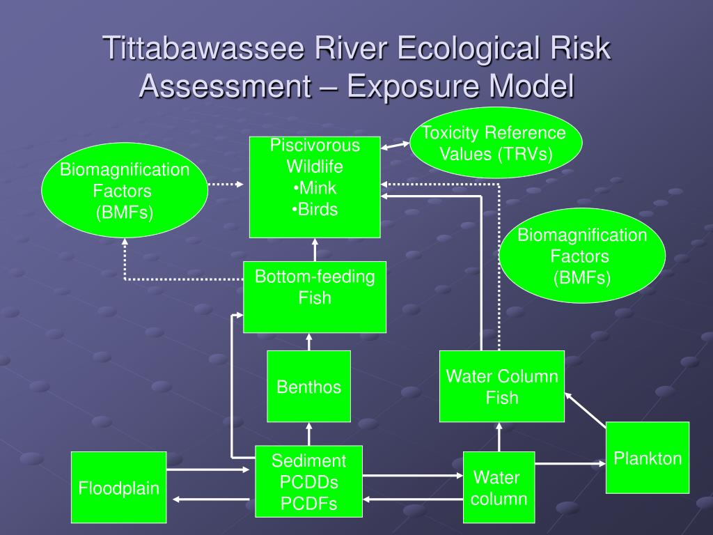 Tittabawassee River Ecological Risk Assessment – Exposure Model