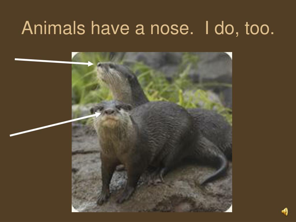 Animals have a nose.  I do, too.
