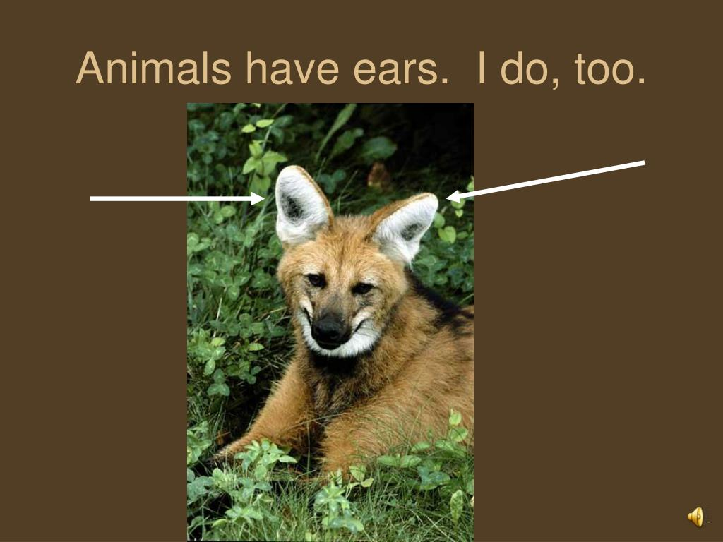 Animals have ears.  I do, too.