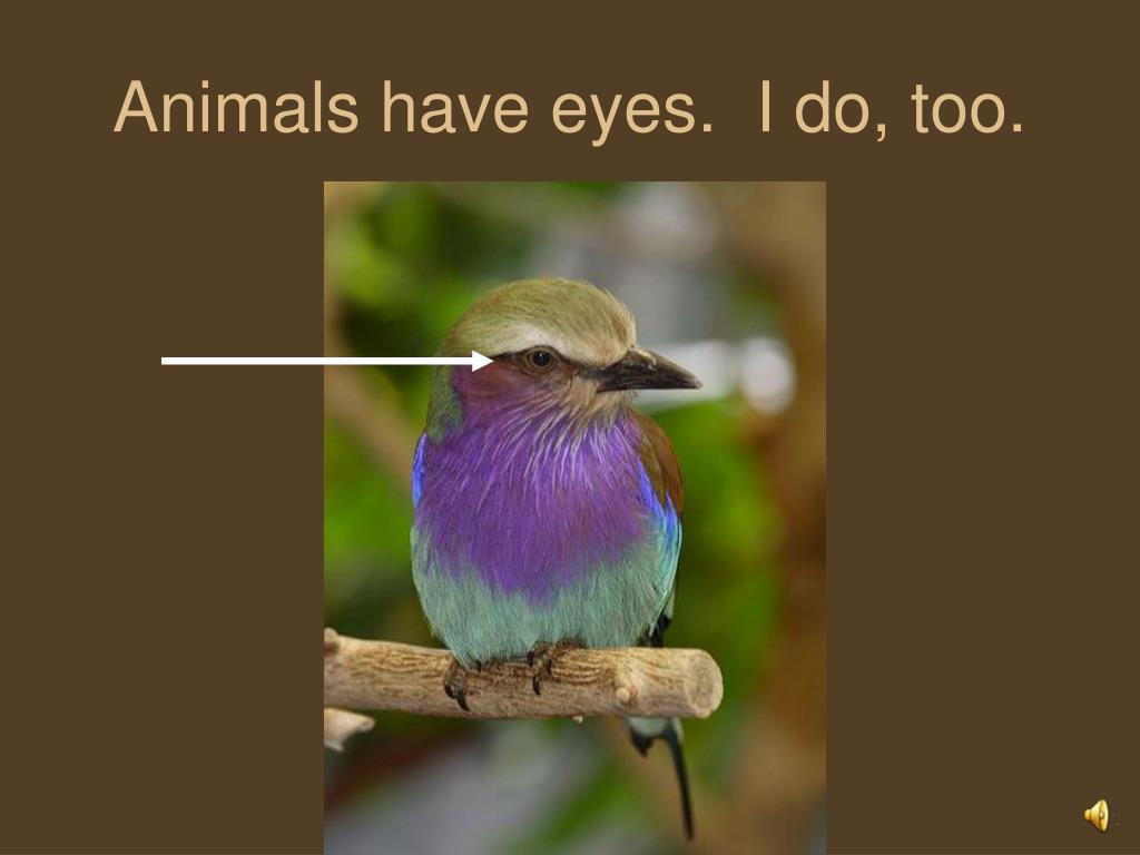 Animals have eyes.  I do, too.