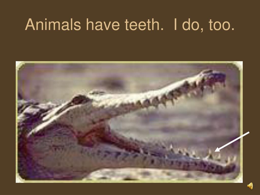 Animals have teeth.  I do, too.
