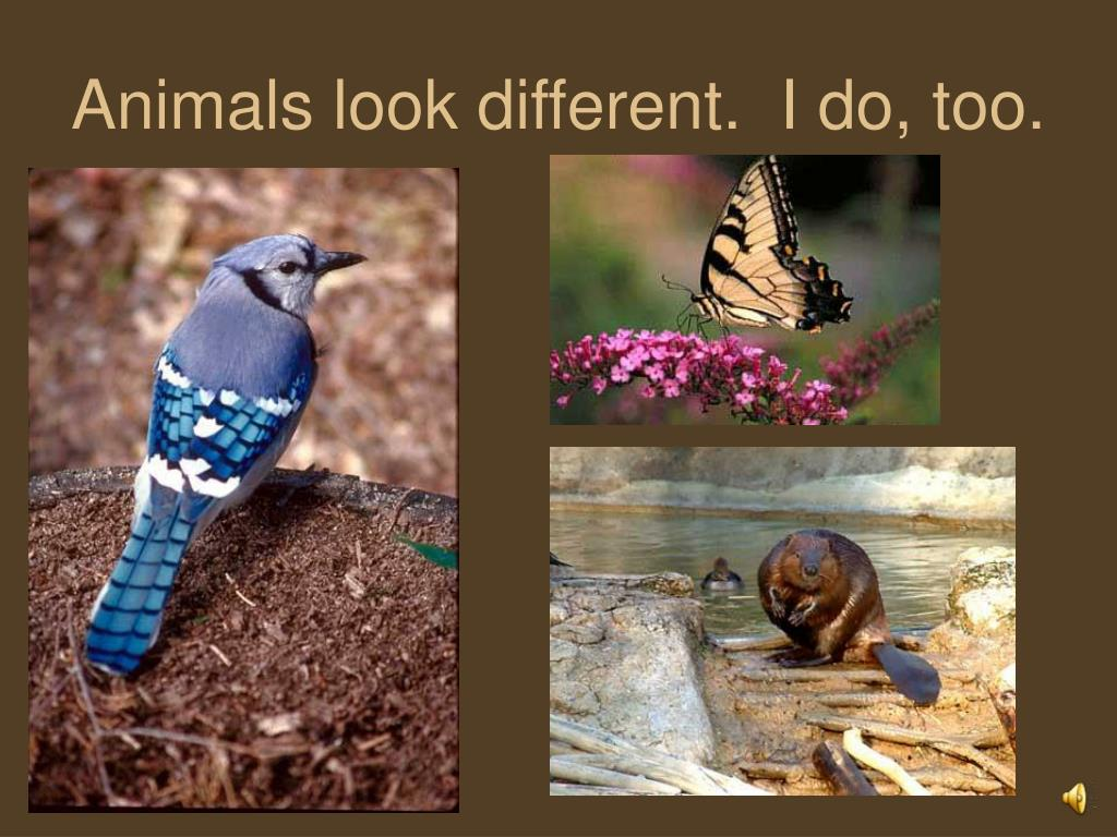 Animals look different.  I do, too.