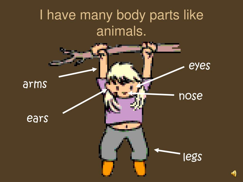 I have many body parts like animals.