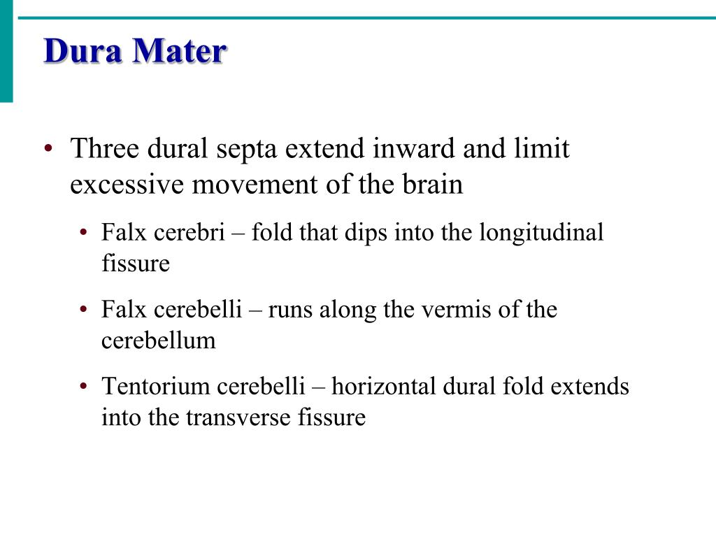Three dural septa extend inward and limit excessive movement of the brain