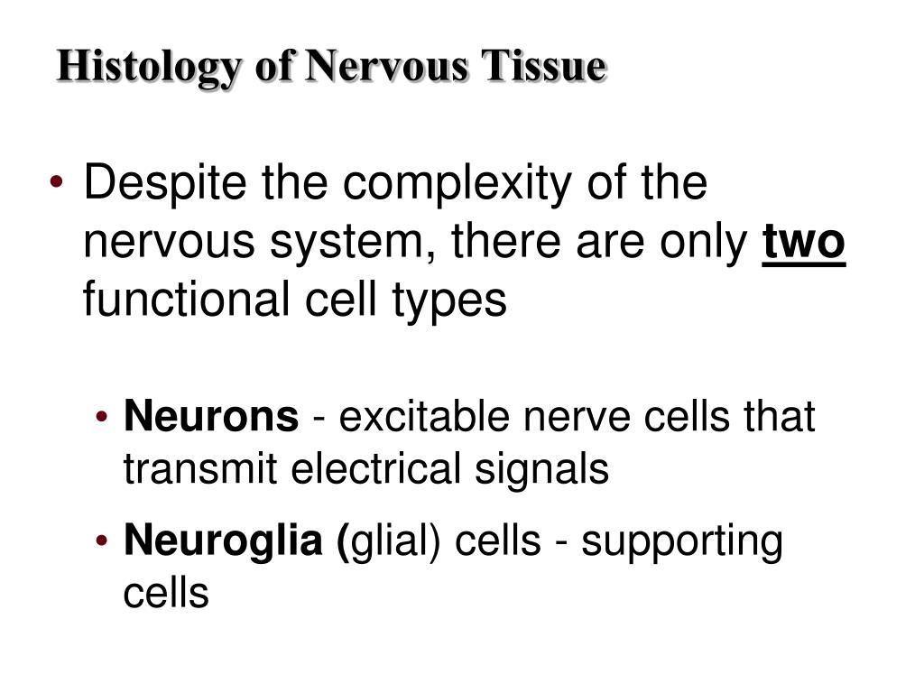 Despite the complexity of the nervous system, there are only