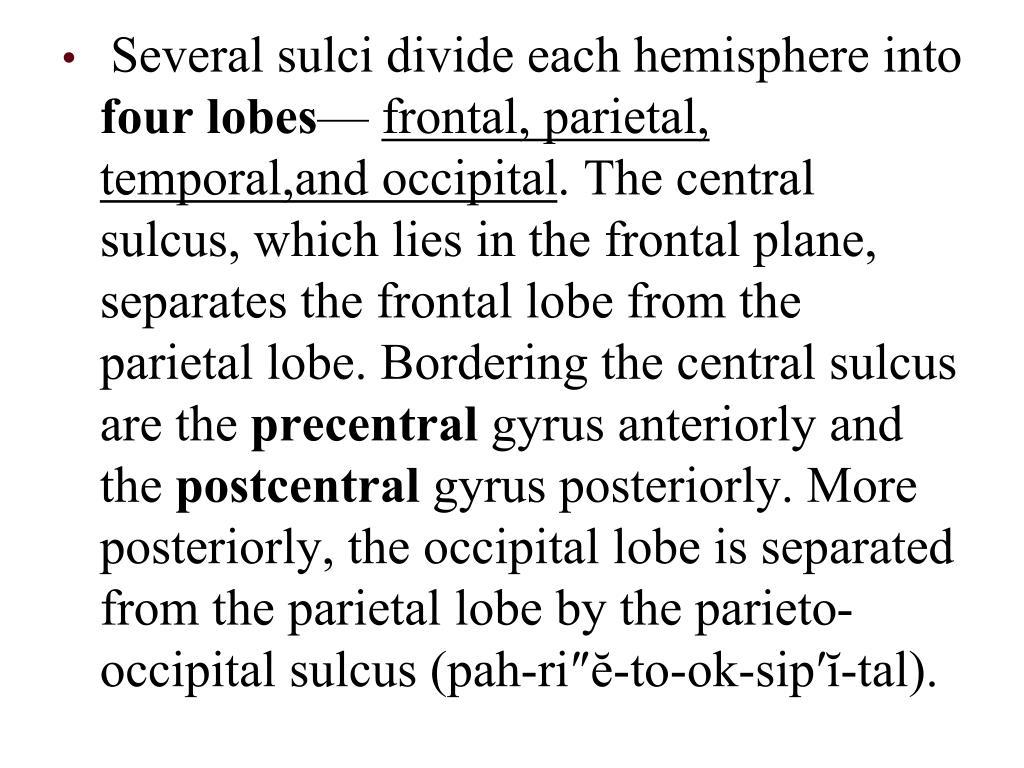 Several sulci divide each hemisphere into