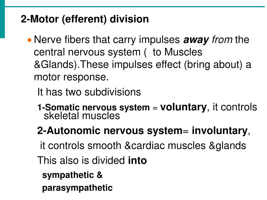 2-Motor (efferent) division