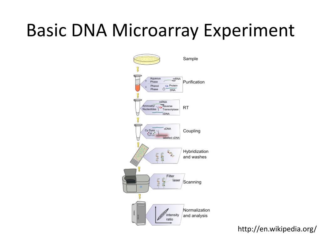 Basic DNA Microarray Experiment